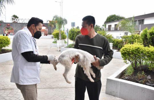 Realizó Coronango aplicación de vacunas contra la rabia a perros y gatos