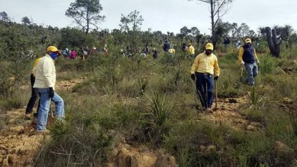 Realizará Gobierno del Estado macro reforestación en 13 municipios